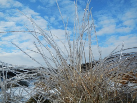 Frozen grass, Peak District, taken January 2012